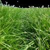 Grass mixture selection