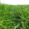 Grass mixture selection