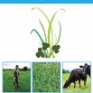 Welsh Grass Value Project Report
