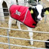Calf Jackets Tried & Tested