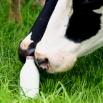 Promoting Milk