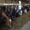 Feed Trough Cleanliness & Surfaces Farming Note