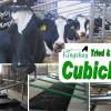 Tried & Tested Cubicles Report