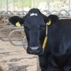 Kingshay's Dairy Costings Focus Report 2021 - RELEASED