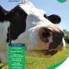 Dairy Costings Focus Report 2013