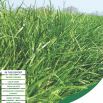 The Forage Costings Report 2020