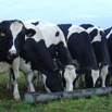 Contract Heifer Rearing Farming Note