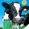 Dairy Costings Focus Report 2012