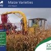 Maize Varieties Report 2013