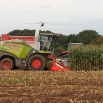 Help us with our maize survey!