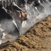 Silage Requirements Assessment