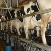 Minimising Bactoscans Farming Note