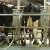 Dairy & Parlour Energy Efficiency Farming Note
