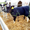 Kingshay Calf Jackets Tried & Tested Report