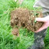 Green Manures & Other Crops to Improve Soil Health