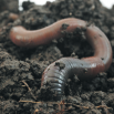 Soil Biology – An Introduction