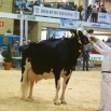 The Key to Breeding Indices Farming Note