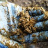Assessing Cow Muck Farming Note