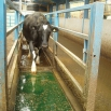 Footbaths Farming Note