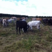 Deferred Grazing Farming Note