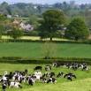 Reducing bTB Transmission on Farm