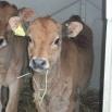 Managing Twinning Farming Note