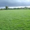 Maximising Grass Growth & Quality Farming Note