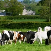 Metabolic Blood Profiles Farming Note