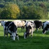 Realising Milk from Forage