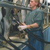 Parlour Routine Farming Note