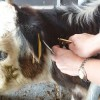 Bovine TB Farming Note