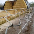 Cow Handling Facilities