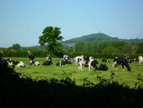 BF spring grazing (1)