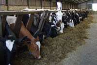 Feed Trough Cleanliness & Surfaces
