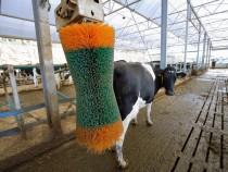 Cow Brush - South West Dairy Development Centre