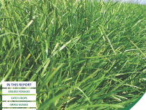 Forage Costings Report Front Cover 2020