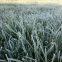 Frost3