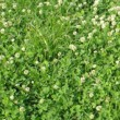 Spring Grassland Fertiliser