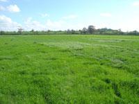 Grass-Squares-12acres
