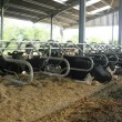 Noads new cowshed with M2M (22)
