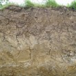 Improving Soil Structure for Maize