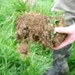 Soil-Profile2