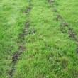 Subsoiled Grassland Blelock NI 060907