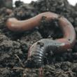 Worm_CMYK-crop2