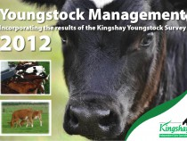 Youngstock Management Report