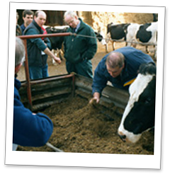 Kingshay Feeding the Dairy Cow Training