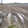 grassland soil compaction