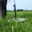 grazed grass management