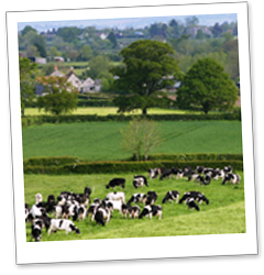 Kingshay Effective Grazing Management