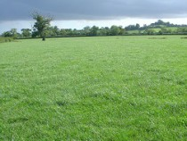 maximising grass growth and quality